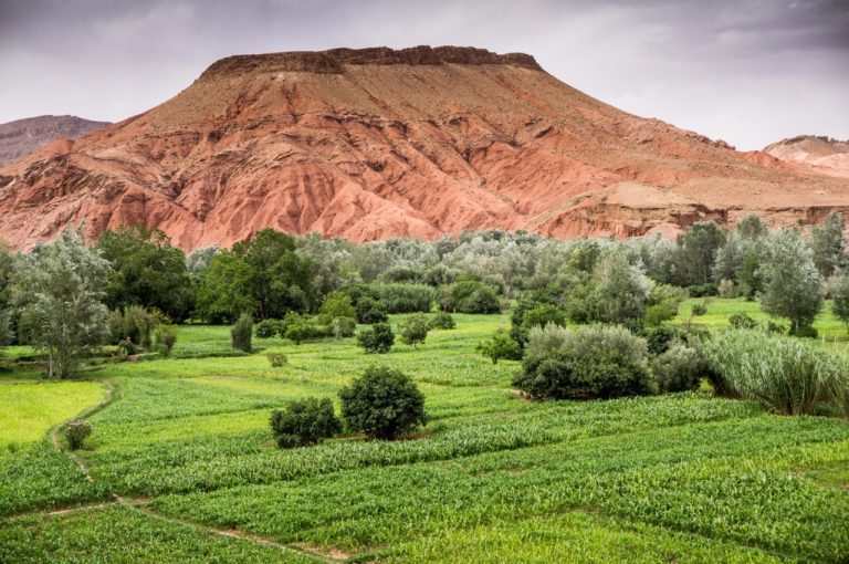 Boumalne Dades,  Morocco, Africa,  North Africa,  scenery fields green irrigation agriculture desert Gorges du Dades