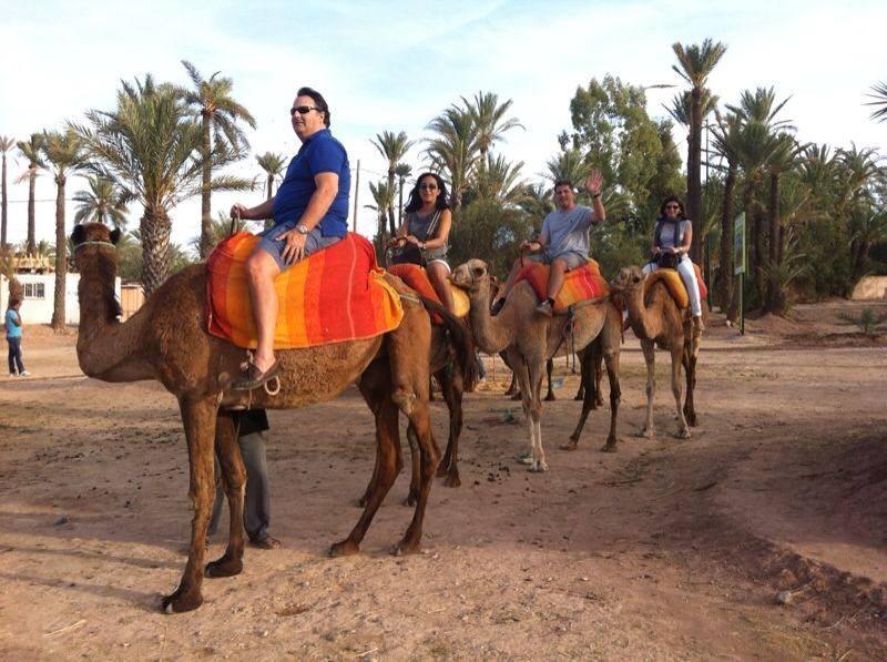 palmeral-marrakech-dromedario