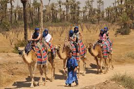 camello palmeral
