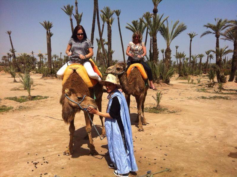 camello1
