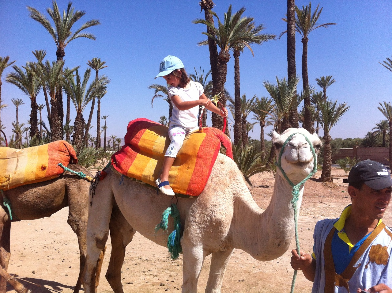 camello11