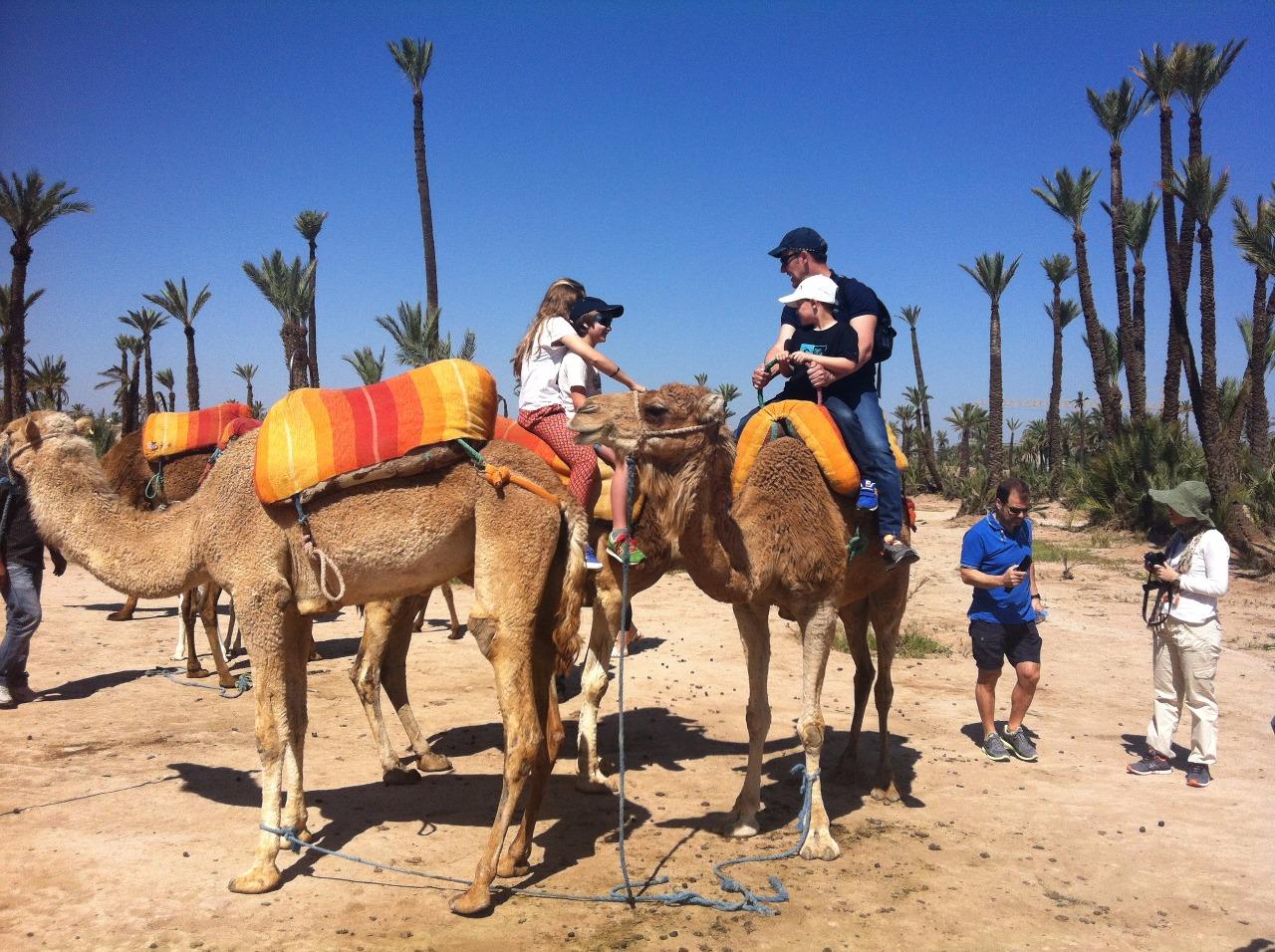 camello13