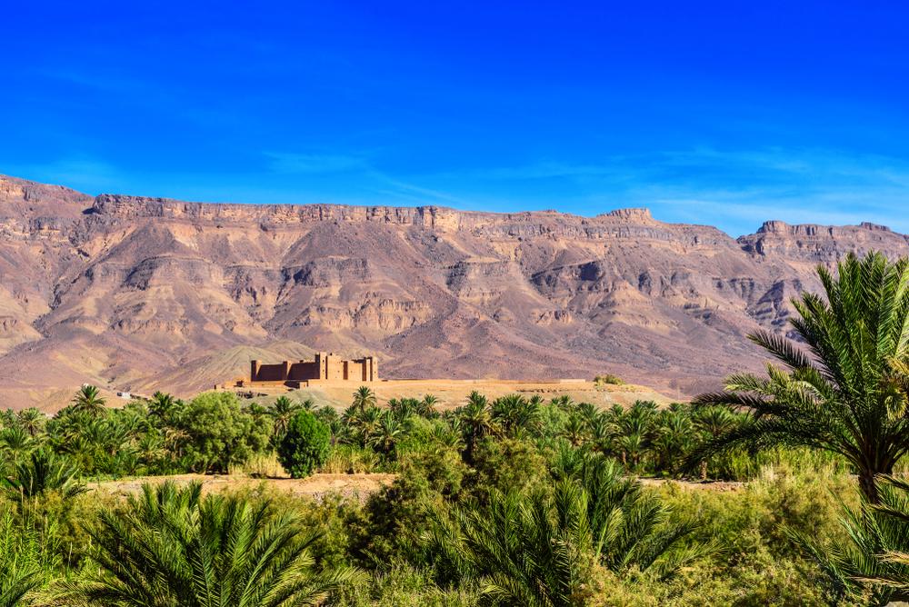 Palmeral de Marruecos