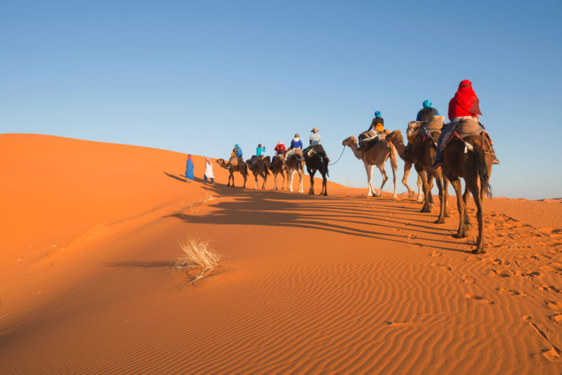 Caravana de dromedarios fin de año desierto